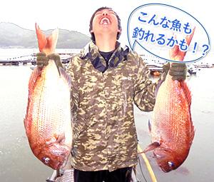 こんな魚も釣れるかも!|遊漁船じん丸